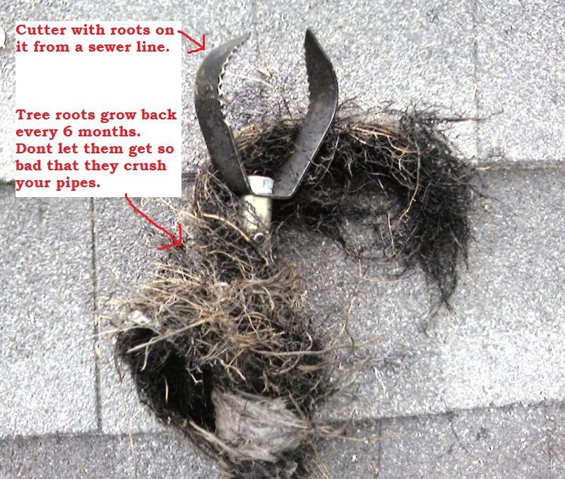 Image Result For Roots In Drain Pipe